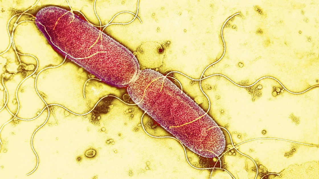 bacterie in darmen diarree