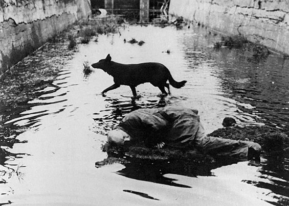 A man laying in water on the ground with a dog in the background