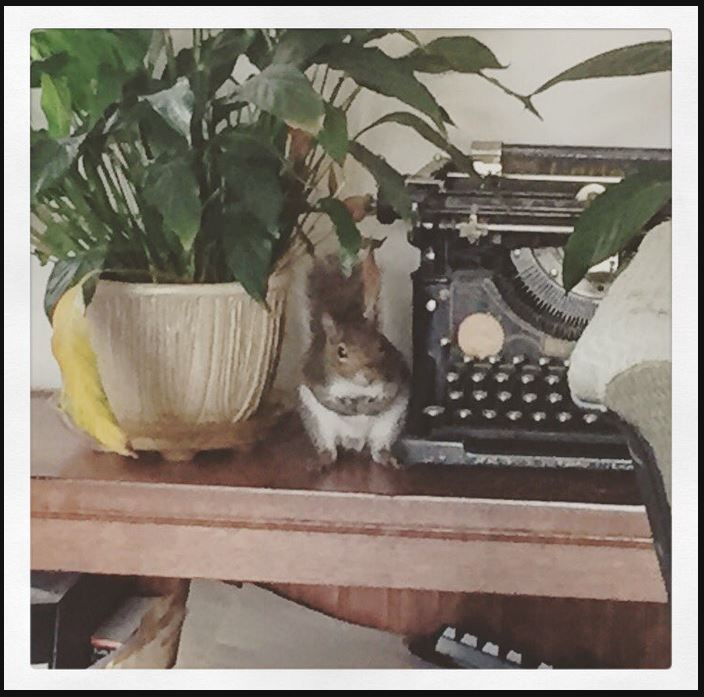 squirreloffice